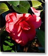 Camelia In The Shadows Metal Print