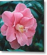 Camellia 1 Metal Print