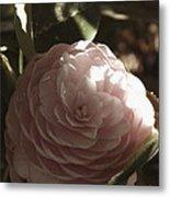 Camellia 2 Metal Print