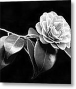 Camellia Flower In Black And White Metal Print