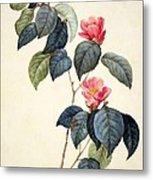 Camellia Japonica Metal Print by Pierre Joseph Redoute