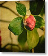 Camellia Metal Print by Marco Oliveira