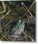 Camo Frog Ninja Metal Print
