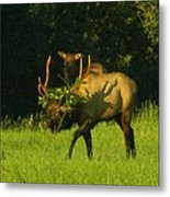Camoflaged Elk With Shadows Metal Print