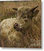 Camouflaged Cow Metal Print