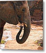 Camouflaged Elephant Metal Print