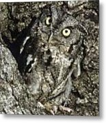 Camouflaged Screech Owl Metal Print