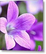 Campanula Portenschlagiana Blue Bell Flowers Closeup Metal Print