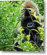 Can I Help You? Metal Print