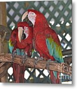 Can You Get That Itch For Me? Metal Print