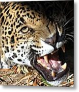 Can You Hear Me Now? Metal Print