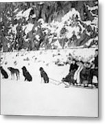 Canada Dog Sled, C1910 Metal Print