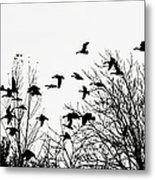 Canada Geese Flight Silhouette Metal Print