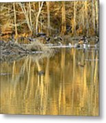Canada Geese On A Golden Morning Metal Print