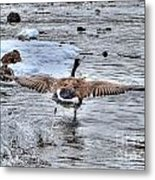 Canada Goose - The Runway Metal Print by Skye Ryan-Evans