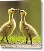 Canada Goose Babies Metal Print