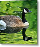 Canada Goose On Green Pond Metal Print