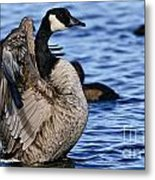 Canada Goose Pictures 84 Metal Print