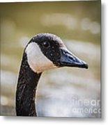 Canada Goose Profile Metal Print