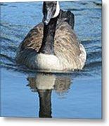 Canada Goose Reflecting Metal Print