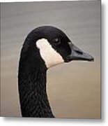 Canadian Feathered Friend Metal Print
