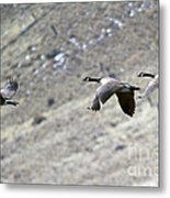 Canadian Flight Metal Print