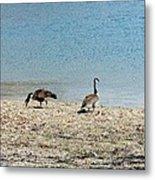 Canadian Geese 2 Metal Print
