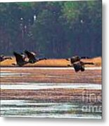Canadian Geese In Flight Metal Print