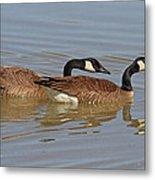 Canadian Geese Mates Metal Print