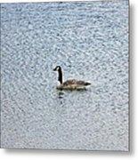 Canadian Goose 2 Metal Print