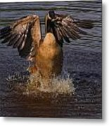 Canadian Goose Smooth Landing Metal Print