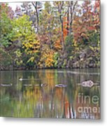 Canadian Goose Swimming Through The Autumn Reflections On The Pond Metal Print