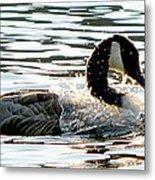 Canadian Goose Wash Metal Print