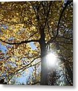 Canadian Maple Metal Print