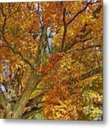 Canadian Tree 2012 Metal Print