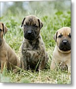 Canary Dog Puppies Metal Print