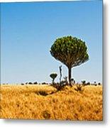Candelabra Trees Metal Print