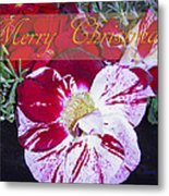 Candy Cane Flower-2 Metal Print
