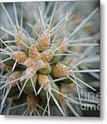 Cane Cholla Cactus Spines Metal Print