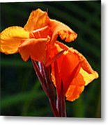 Canna In Sunlight Metal Print by Margaret Saheed