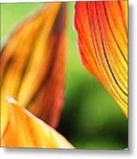 Canna Lily Named Durban Metal Print