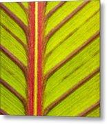 Canna Lily Red Stripe  Metal Print