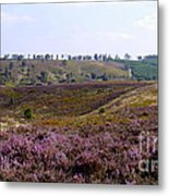 Cannock Chase Heather 4 Metal Print