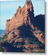 Cannot See The Forrest For The Trees Metal Print