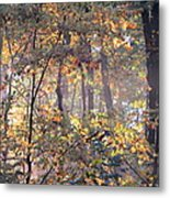 Canopy Collage Metal Print