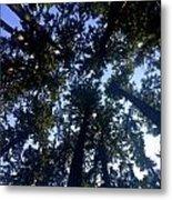 Canopy High Metal Print