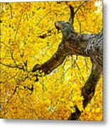 Canopy Of Autumn Leaves Metal Print