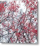 Canopy Trees Metal Print