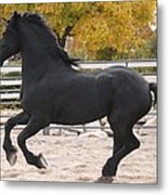 Canter In Spirit Metal Print by Royal Grove Fine Art