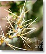 Canyon Cactus Metal Print